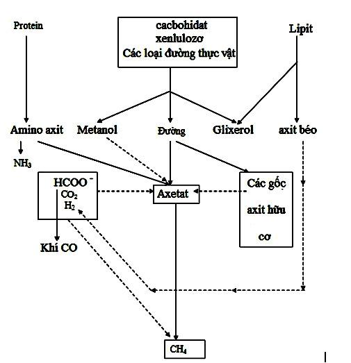 Sơ đồ lên men yếm khí của vi sinh vật sản sinh ra CH4